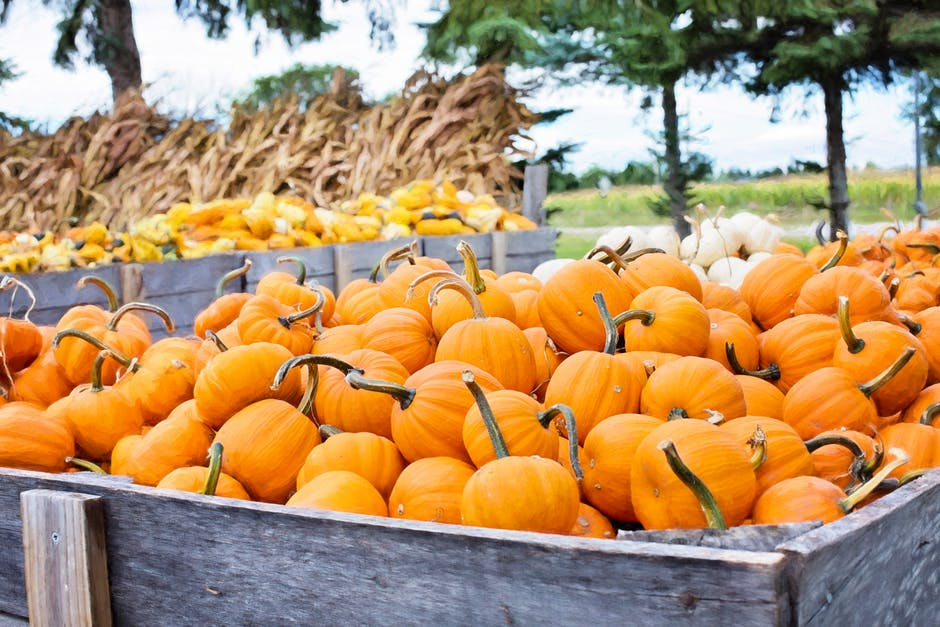 6 Ways to Prep for Fall in the OC