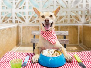 Best Dog Friendly Places in South Orange County